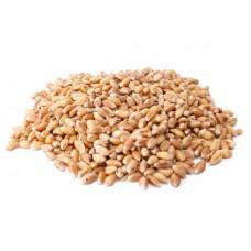BLM Wheat